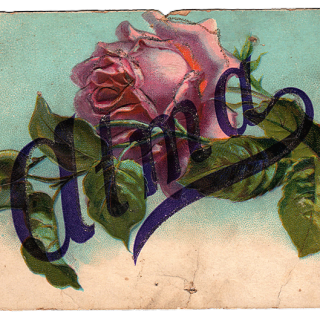 Stunning Victorian Graphic – Perfect Rose – Great Texture