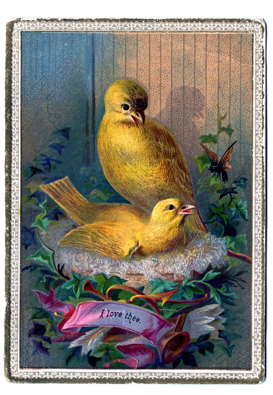 Two Canary Birds in Nest Image