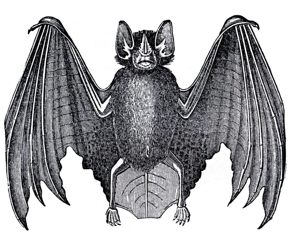 Bat Clip Art Image