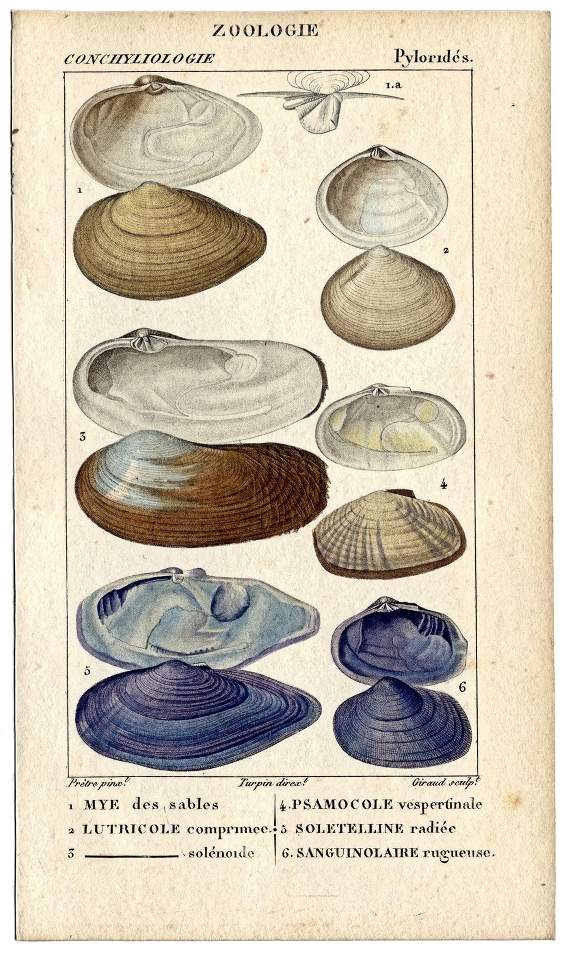 Seashells French
