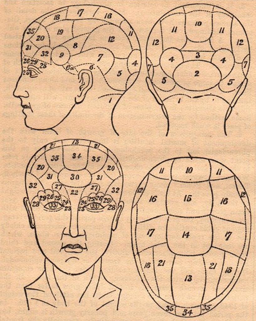 Antique Phrenology Head Ephemera