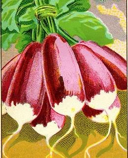 Vintage Vegetable Clip Art – Radishes & Leeks
