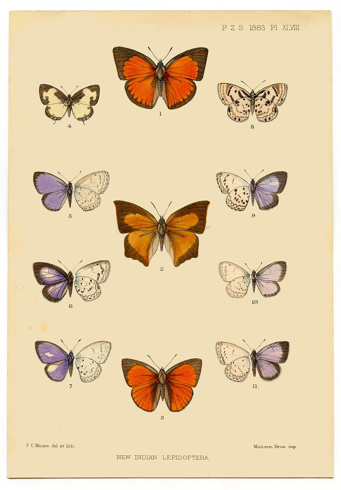Instant Printable Art - Antique Butterfly - The Graphics Fairy