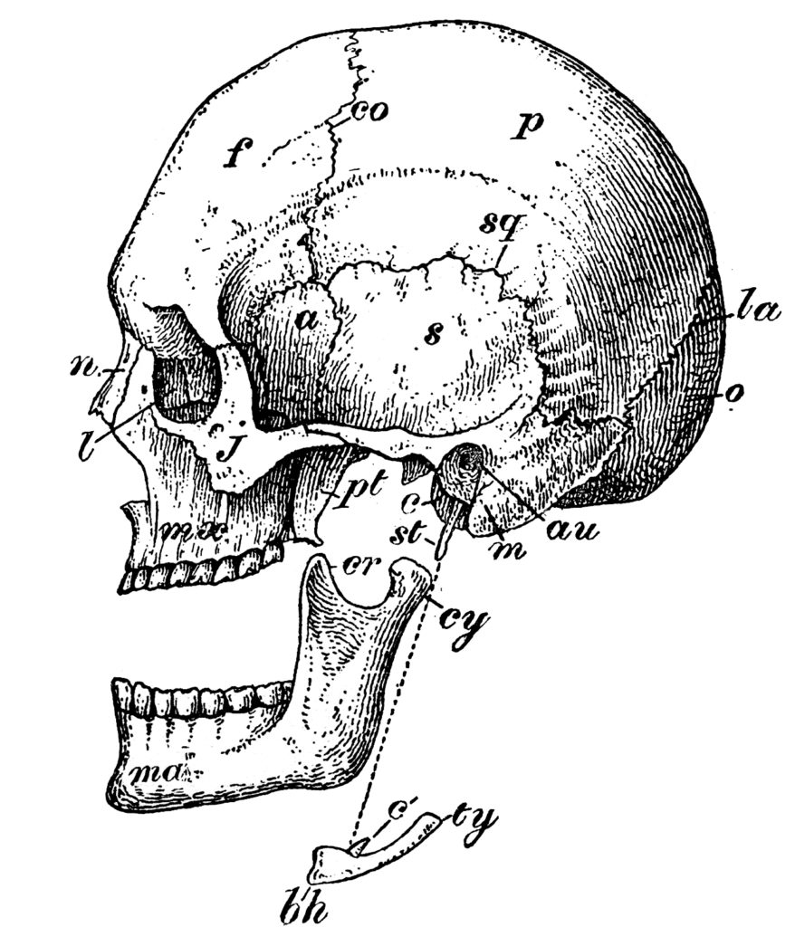 Laughing Skull Diagram Image