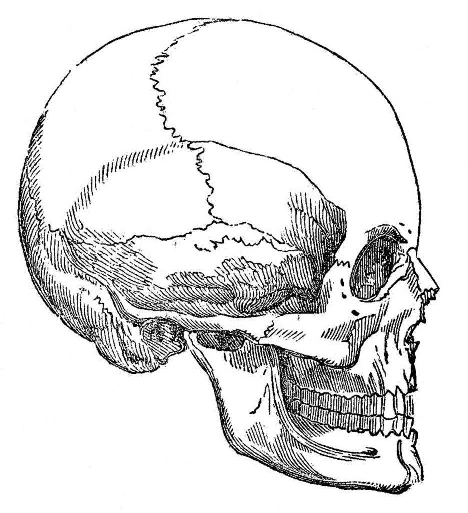 Vintage Skull Clip Art