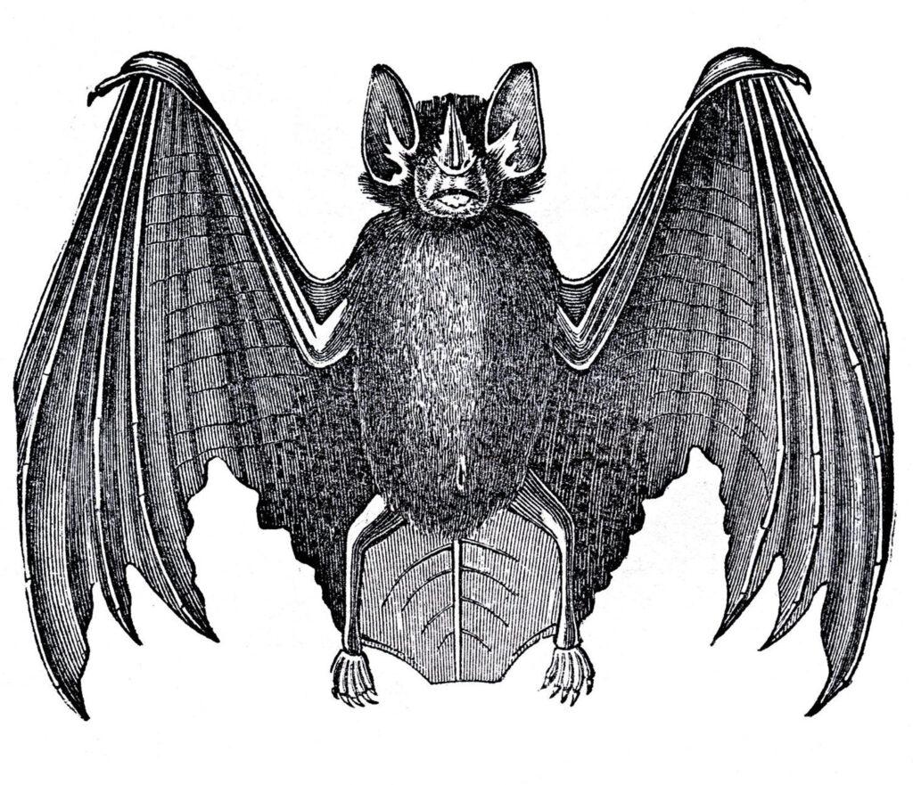 Black and White Bat Illustration