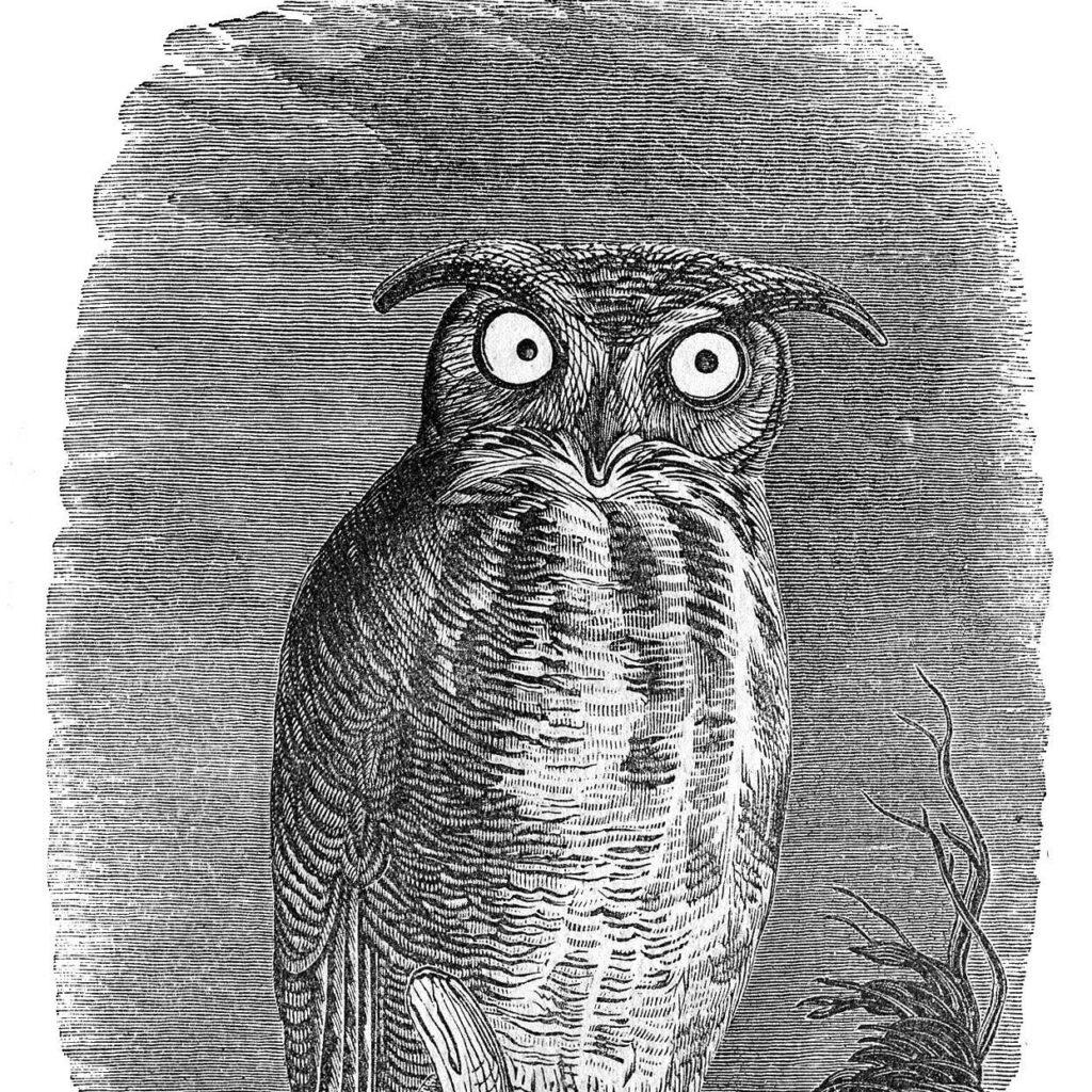 Spooky Owl Engraving