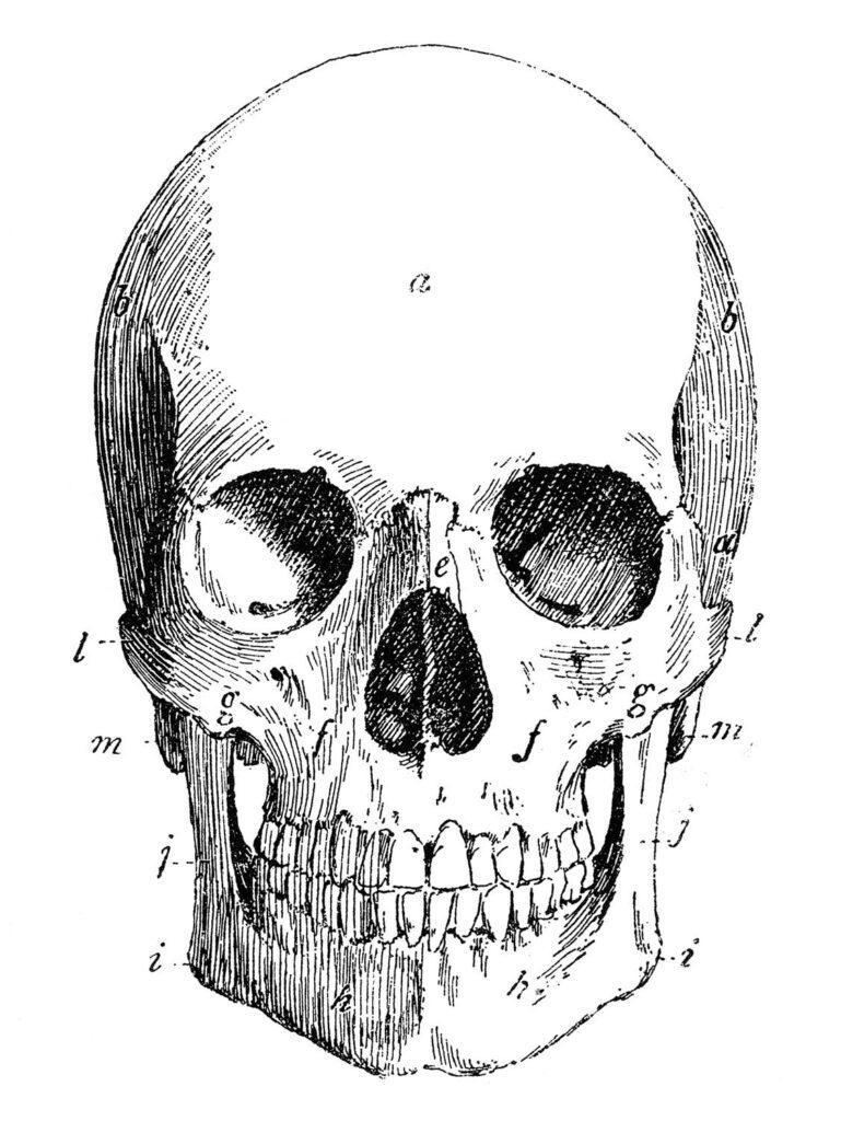 Halloween Black and White Skull Image