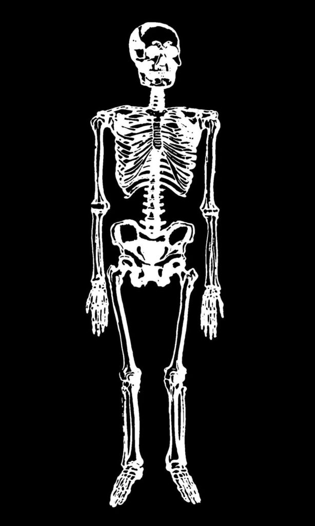 Black and White Skeleton Image