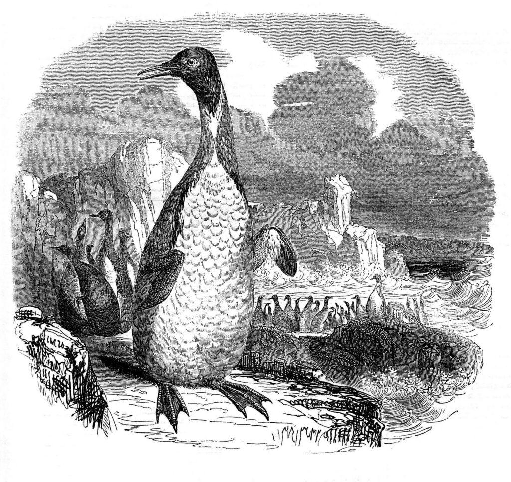 Vintage Penguin Clipart