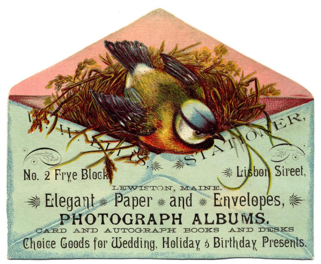 bird with nest in envelope