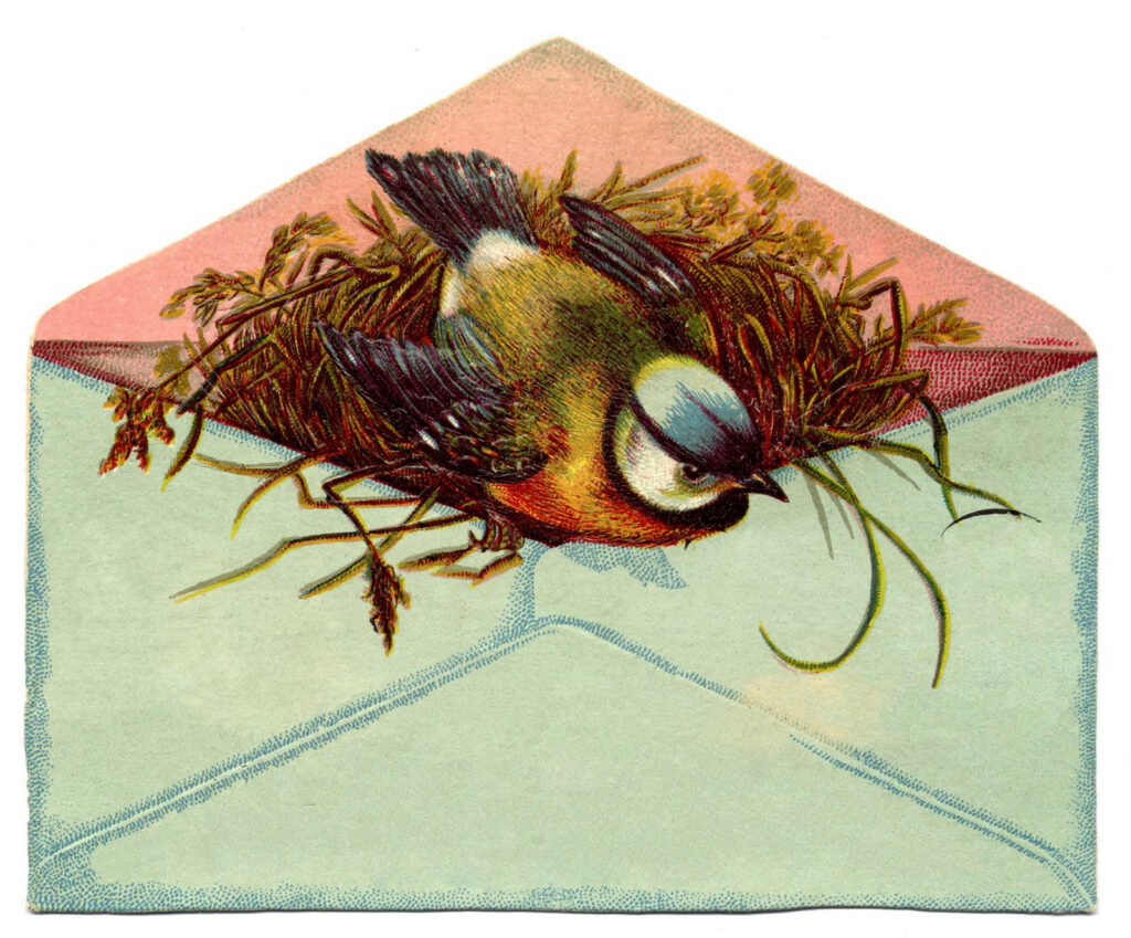 Bird with nest in Envelope plain image