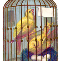 Canary Bird Cage Image