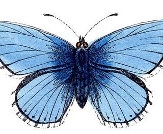 Vintage Clip Art – Natural History – Butterflies