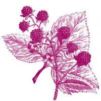 berries+vintage+image+-graphicsfairy009pk