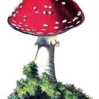 mushroom+red+vintage+image--graphicsfairy012