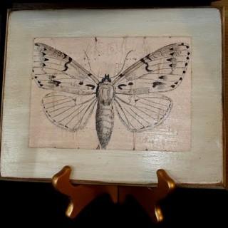Antiqued Natural History Plaques