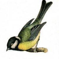 bird+vintage+graphic--graphicsfairy009bsm