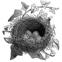 birds+nest+ivy+vintage+graphicsfairy004