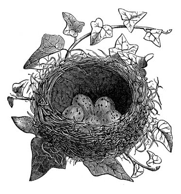 Vintage Clip Art Birds And Nest Engravings The