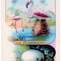 flamingos+vintage+graphicsfairy006b