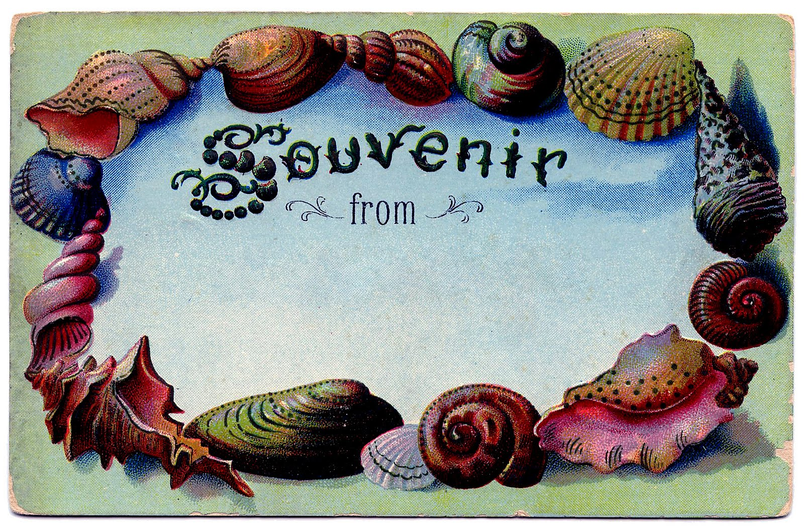 Vintage Clip Art - Souvenir Seashell Postcard - The ...