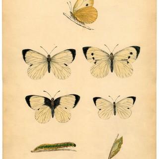 Instant Art Printable – White Butterflies
