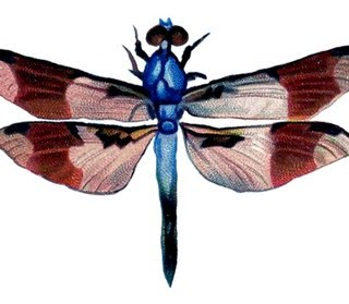 Vintage Clip Art – Colorful Dragonfly