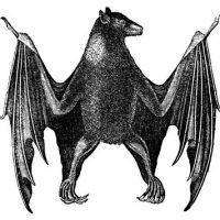 Antique Natural History Image - Bat - Halloween