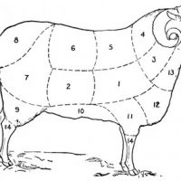 Vintage Clip Art - Sheep Diagram