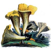mushrooms+yellow+vintage+image--graphicsfairy