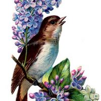 307birds+and+flowers+vintage+image+graphicsfairy3b