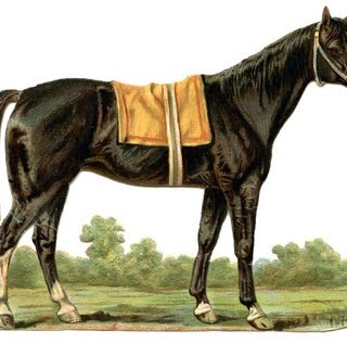 Vintage Animal Graphic – Beautiful Horse
