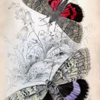 Butterflies+vintage+image+graphicsfairy004sm