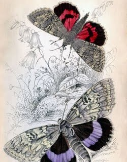 Instant Art Printable – Colorful Butterflies – Moths