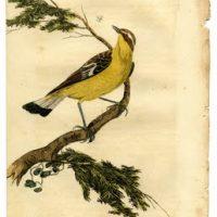 bird+yellow+print+vintage+image+graphicsfairy003sm