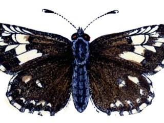 Vintage Graphics – Butterflies and Caterpillar