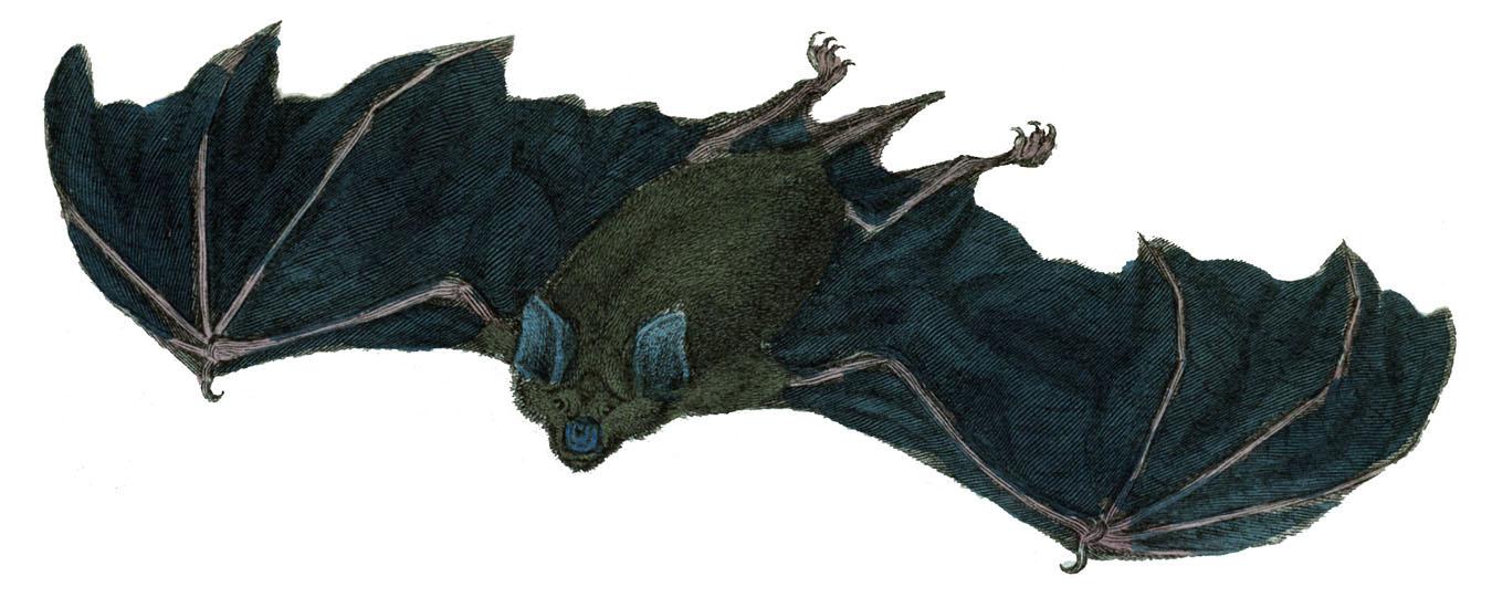 instant art printable - halloween - flying bat