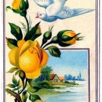 yellow+rose+dove+vintage+image+graphicsfairy