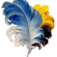 293feathers+plumes+vintage+image+graphicsfairy003b