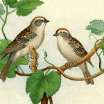 295birds+and+nests+vintage+image+graphicsfairy9