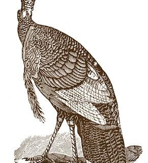 Vintage Thanksgiving Clip Art – Turkeys
