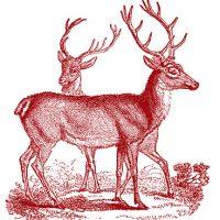 Vintage Clip Art - Lovely Deer - Christmas