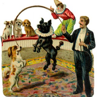 Vintage Graphic – Circus Dogs