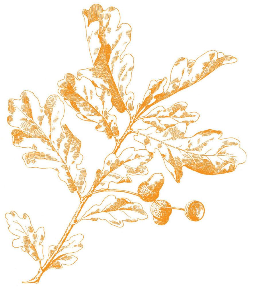 Oak Leaves Image Gold