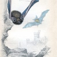 Flying Bats Image Halloween