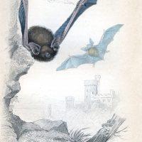 Flying Bats Image Halloween