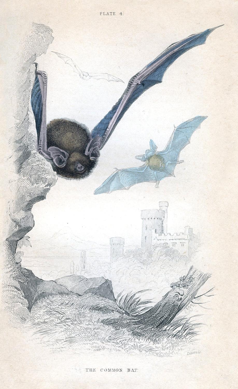 Instant Art Printable Flying Bats Halloween The