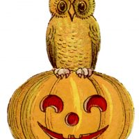 Halloween Owl Vintage Image