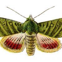 moth+vintage+image+graphicsfairy2